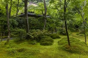 新緑の祇王寺の写真素材 [FYI04863702]