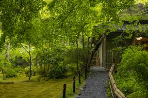 新緑の祇王寺の写真素材 [FYI04863718]