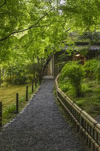 新緑の祇王寺の写真素材 [FYI04863720]