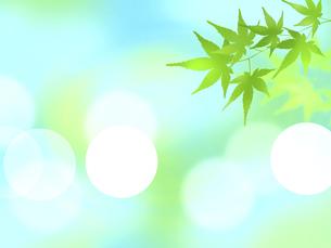 初夏 すがすがしい背景 青紅葉 木漏れ日 夏 光 丸ボケのイラスト素材 [FYI04863780]