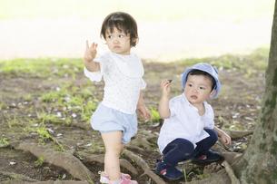 公園でどんぐり拾いをする子供たちの写真素材 [FYI04863921]