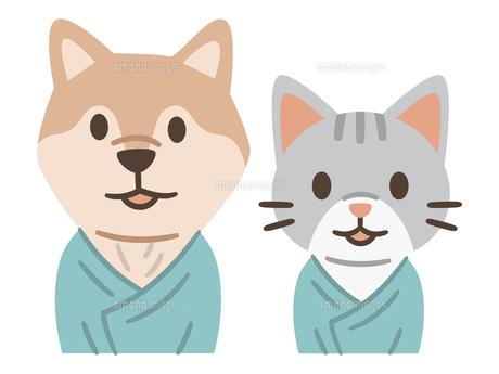 検査着を着てペットドックを受診する犬と猫のイラスト素材 [FYI04863971]