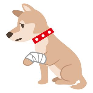 包帯を巻いた犬のイラスト素材 [FYI04863973]