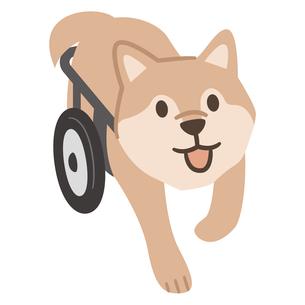 犬用車椅子のイラスト素材 [FYI04864014]