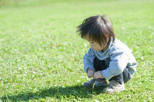 草原で何かを探すしゃがんだ男の子の写真素材 [FYI04864021]