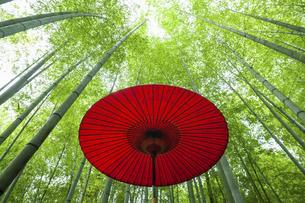 新緑の竹林に置かれた赤い番傘の写真素材 [FYI04864283]