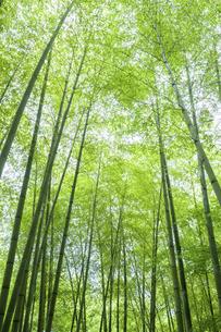 新緑の竹林の写真素材 [FYI04864287]