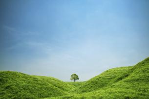 新緑の草原に立つ一本の樹の写真素材 [FYI04864293]
