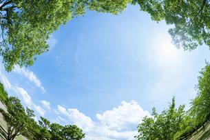 新緑の樹々と青空の写真素材 [FYI04864305]