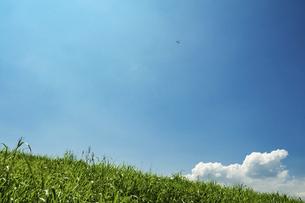 青空と新緑の草原の写真素材 [FYI04864319]