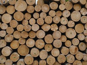 木材の写真素材 [FYI04864342]