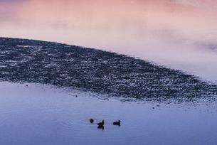 糸島の鳥のいる干潟の夕景の写真素材 [FYI04864344]