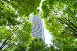 緑に囲まれたタワーマンションの写真素材 [FYI04864508]