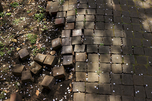 桜の花びらが散る公園の崩れかけたレンガの遊歩道の写真素材 [FYI04864684]