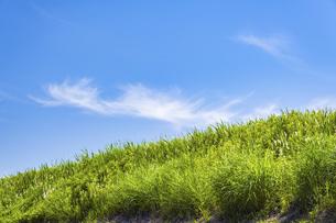 【自然風景】透き通った青空の下の草原の丘 背景素材の写真素材 [FYI04864696]