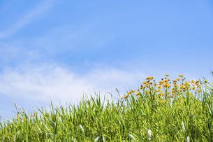 【自然風景】透き通った青空の下の草原の丘 背景素材の写真素材 [FYI04864723]