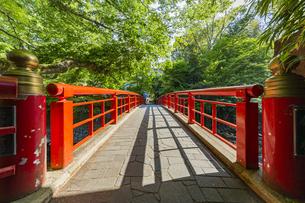 修善寺温泉 春の新緑に映える桂橋(北側から南側への風景)の写真素材 [FYI04864849]