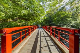 修善寺温泉 春の新緑に映える桂橋(北側から南側への風景)の写真素材 [FYI04864853]