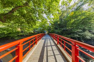 修善寺温泉 春の新緑に映える桂橋(北側から南側への風景)の写真素材 [FYI04864855]