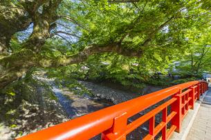 修善寺温泉 春の新緑に映える桂橋(北側から南側への風景)の写真素材 [FYI04864858]