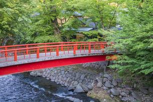 修善寺温泉 春の新緑に映える桂橋(上流北側からの風景)の写真素材 [FYI04864863]