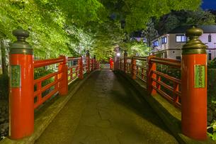 修善寺温泉 春の新緑に映える夜の楓橋(北側から南側への風景)の写真素材 [FYI04864872]
