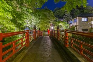 修善寺温泉 春の新緑に映える夜の楓橋(北側から南側への風景)の写真素材 [FYI04864877]