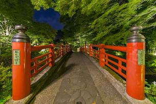 修善寺温泉 春の新緑に映える夜の楓橋(南側から北側への風景)の写真素材 [FYI04864879]