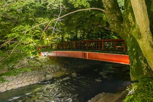 修善寺温泉 ライトアップされた春の新緑と桂橋(下流北側から南側への風景)の写真素材 [FYI04864890]