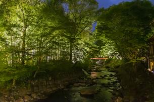 修善寺温泉 桂橋から見るライトアップされた夜の桂川沿いの風景の写真素材 [FYI04864891]