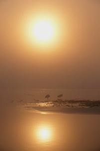霧の中の朝日とタンチョウ(北海道・標茶町)の写真素材 [FYI04865058]