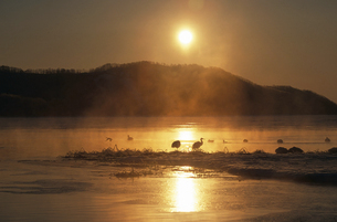 湖に昇る朝日とタンチョウ(北海道・標茶町)の写真素材 [FYI04865073]