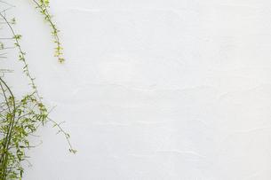 べランダの植物と白い壁の写真素材 [FYI04865432]