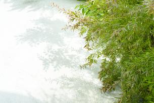 新緑と影の写真素材 [FYI04865491]