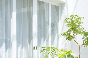 ベランダの植物と白いカーテンの写真素材 [FYI04865495]