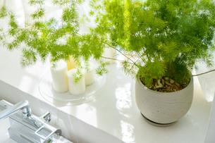 陽のあたる窓際に置かれた植物の写真素材 [FYI04865496]