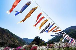 鯉のぼりと青空の写真素材 [FYI04865663]