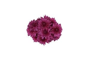 菊の花束の写真素材 [FYI04865735]