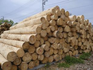 木材の写真素材 [FYI04865751]