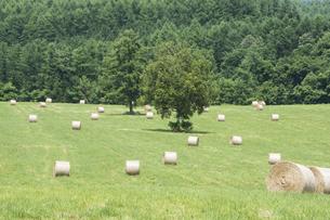 牧草ロールと緑の牧草畑の写真素材 [FYI04865778]