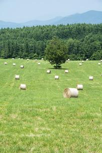 牧草ロールと緑の牧草畑の写真素材 [FYI04865779]