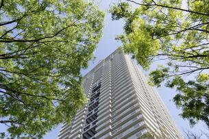 初夏の高層ビルの写真素材 [FYI04865871]