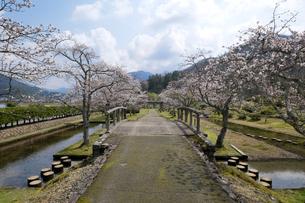 味真野園の桜の写真素材 [FYI04865987]