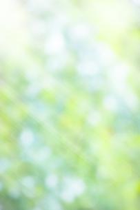 ボケた緑の背景イメージの写真素材 [FYI04865991]