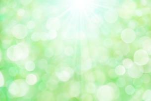 ボケた緑の背景イメージの写真素材 [FYI04865992]