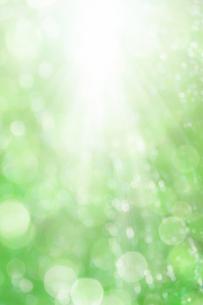 ボケた緑の背景イメージの写真素材 [FYI04865993]