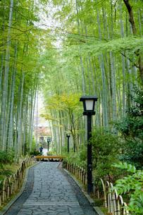 修善寺温泉の竹林の小径と紅葉の写真素材 [FYI04866046]