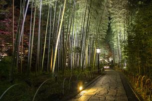 修善寺温泉の竹林の小径ライトアップの写真素材 [FYI04866050]
