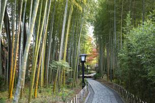 修善寺温泉の竹林の小径と紅葉の写真素材 [FYI04866051]