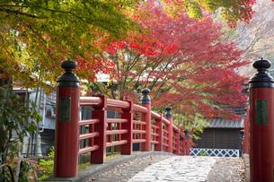 修善寺温泉の楓橋と紅葉の写真素材 [FYI04866055]